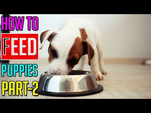 How To Feed Puppies || How To Choose The Best Puppy Food || Part-2 || Dog Facts