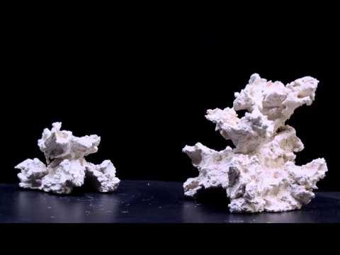 reef ceramic - caves