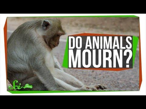 Do Animals Mourn Their Dead?