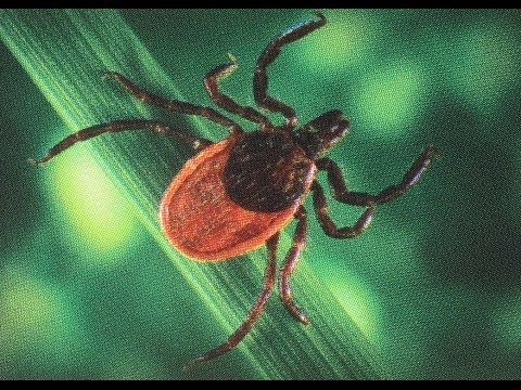 Walk in the Park: Lyme Disease, Prevention and Care, Part 1