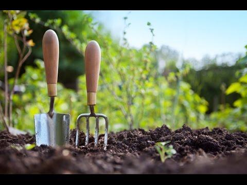 Jamies Allotment | Fruit Trees | Plastic Greenhouse | Indoor Grow Room