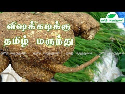 விஷக்கடிக்கு மருந்து ஆகாய கருடன் கிழங்கு |Akasa Garudan Kilangu in Tamil| Corallocarpus Epigaeus