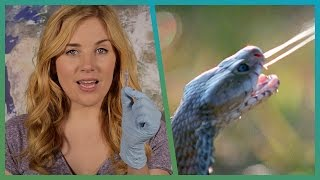 EXPERIMENT! How Snake Venom Kills You | Earth Unplugged
