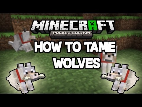 How to Tame Wolves in Minecraft Pocket Edition 0.9.0!