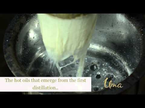 How Uma essential oils are extracted