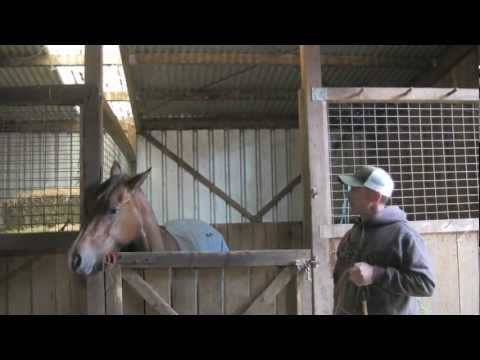 Improving your horses manners in the stall