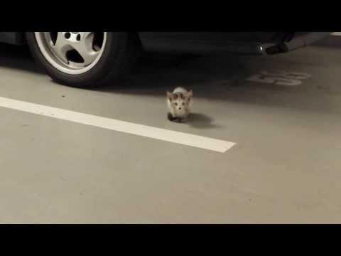 Lost kitten found in the garages