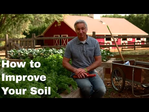 How to Improve Your Soil for Better Results in Any Lawn or Garden