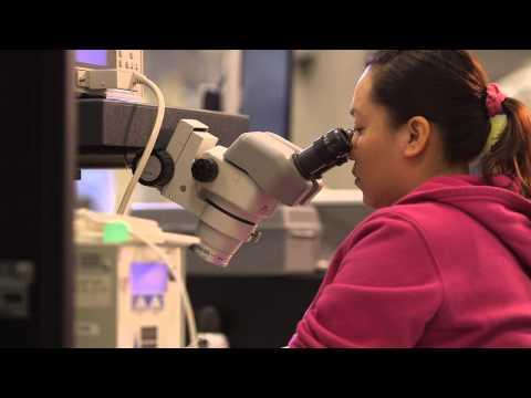 Molex - Medical Capabilities - Specialty Manufacturing