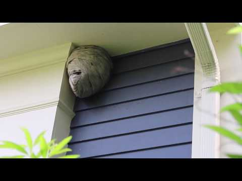Treated and Removed Wasp Nest | Grafton, Ma Pest Control