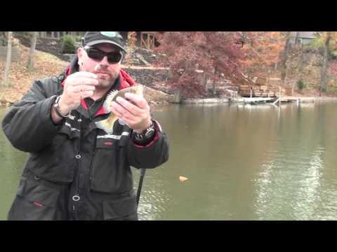 Fall Bluegill Fishing
