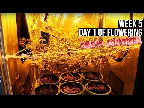 Complete Hydro Grow Tent Kit System - Week 5 Grow Journal | Flowering in Your Garden Begins!