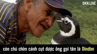 Chim cánh cụt bơi 8.000 km về thăm ân nhân cứu mạng
