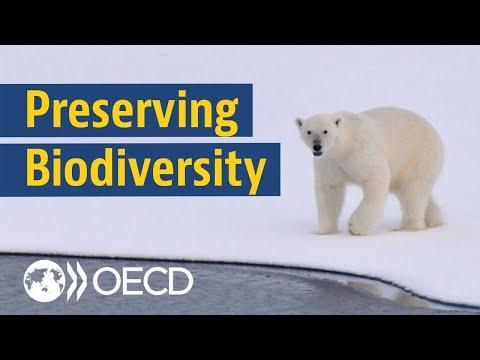 The Battle for Biodiversity