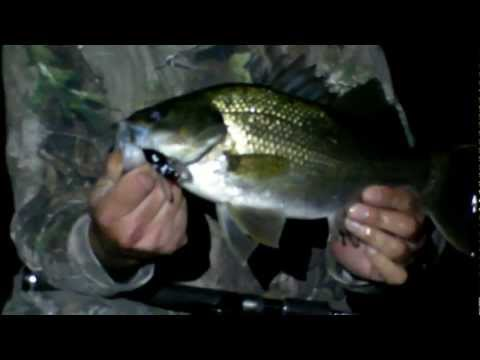 Australian Bass Fishing - Ocean Storm Fishing Tackle - Riley's Winged Cicada bass lure