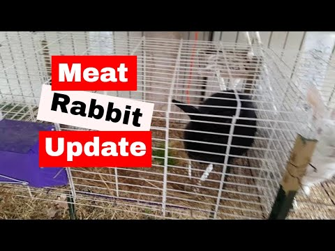 Meat Rabbit update: April snow