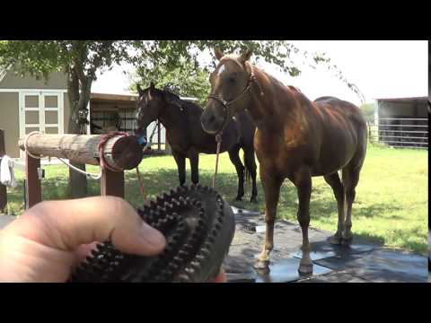 Horse Rain Rot Care & Cleaning - Mud Scald, Dew Poison, Mud Fever - Surgical Scrub Povidone