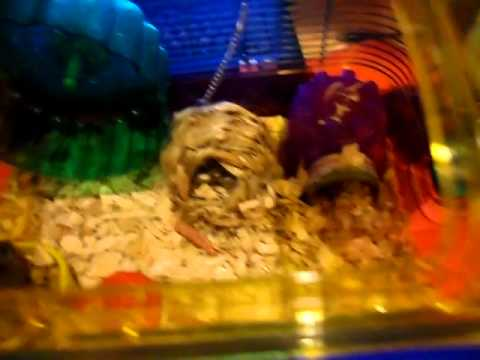 Perfect way how to entertain your hamster