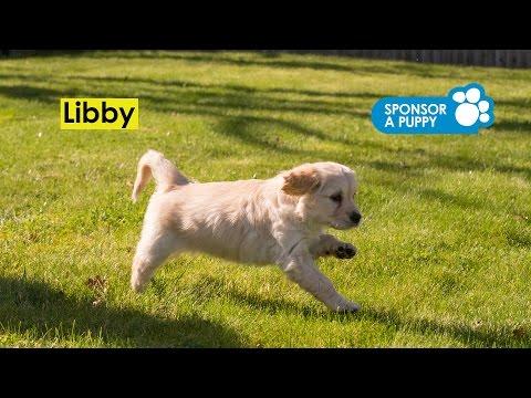 Sponsored puppy Libby