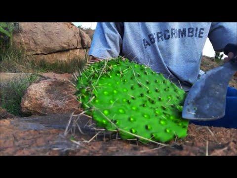 PERFECT SURVIVAL FOOD!! delicious prickly pear cactus!!! PRIMITIVE COOKING!!