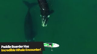 Paddleboarder Has Incredible Encounter With Whales!😱