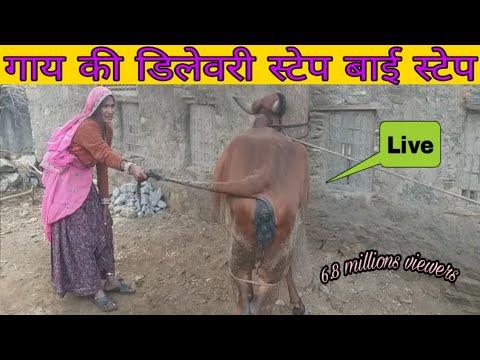 Xxx Mp4 Donkey Amp Cow Meeting Frist Time 2019 3gp Sex
