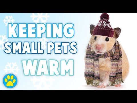 KEEPING HAMSTERS WARM IN THE WINTER