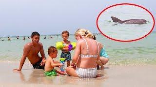 A Wild Dolphin Swims Around Us! (SUPER CLOSE)
