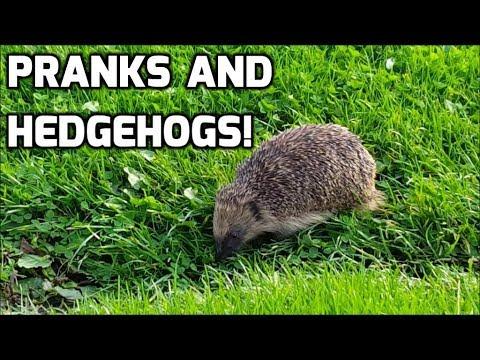 Pranks And Hedgehogs - Prankster Kids!