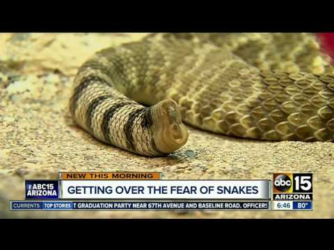 Scared of snakes? This Phoenix event may help you get over your fears