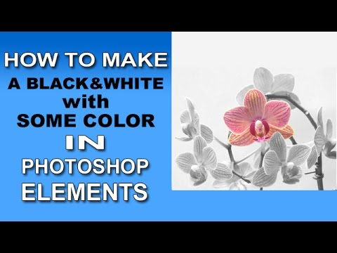 Photoshop Elements - Black and White with Some Color