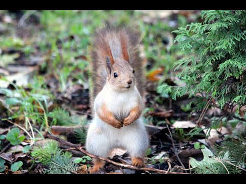 Baby Squirrels Eating Nuts - CUTEST Compilation