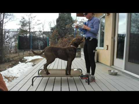 Train your Dog to Stay; Place Command part 1