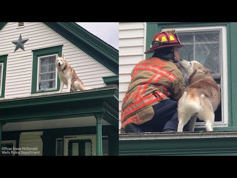 Dog kisses firefighter who rescued him from roof of house