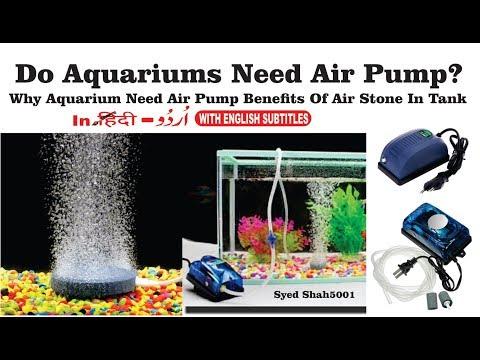 Do Aquariums Need Air Pumps?Quick tips Do bubbles put oxygen in your aquarium?