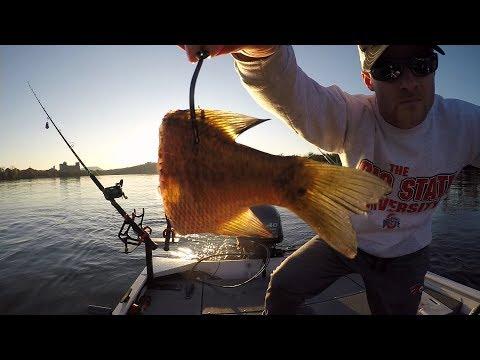 Catching Catfish on BIG PIECES of Cut Bluegill