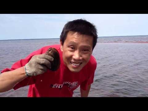 2014-7 bar clam digging @ NS