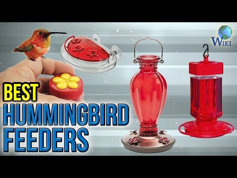 10 Best Hummingbird Feeders 2017
