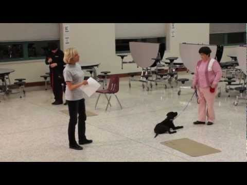 A Day in The Life: Joanie, Guide Dog in Training