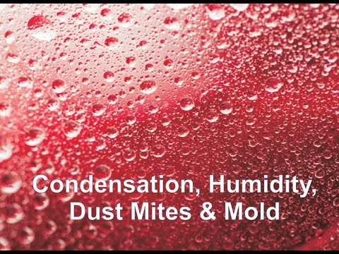 Condensation, Humidity, Dust Mites & Mold