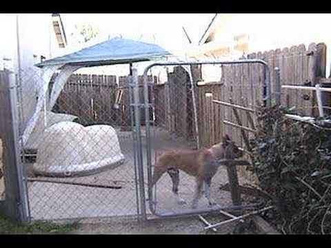 Boxer Experiences Electric Fence