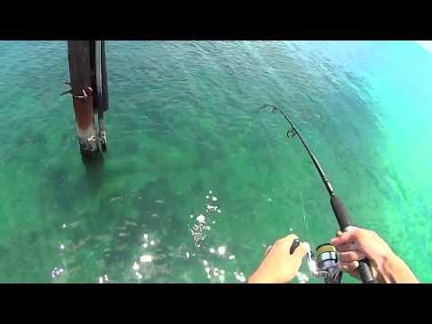 Catching squid