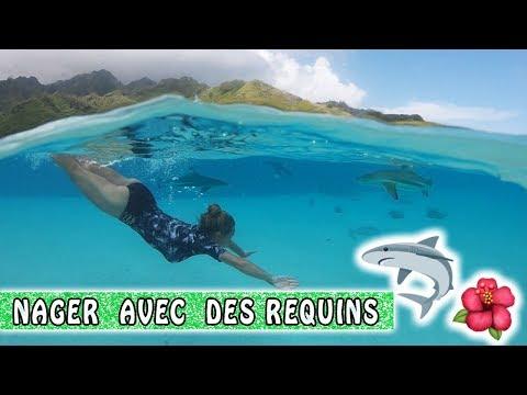 NAGER AVEC LES REQUINS ! 🦈 / Moorea Family Vlog / Tahiti Vlog