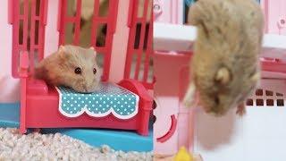my hamster