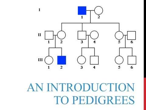 An introduction to genetics pedigrees