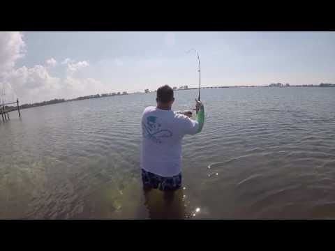 Muscling In A Fat Tampa Bay Redfish & Sight Fishing Sheepshead!