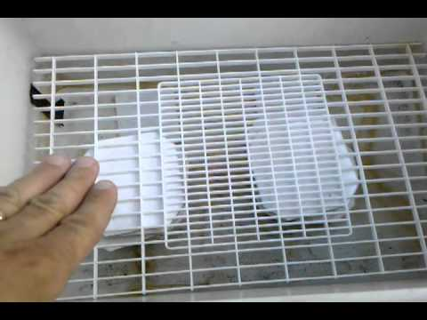 DIY Bearded Dragon incubator