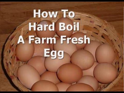 Hard Boiling Farm Fresh Chicken Eggs