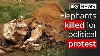 Kenya: Elephants killed for political protest
