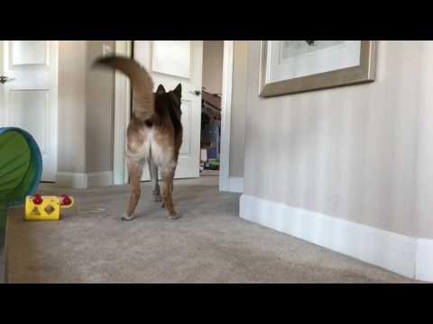 Munster Has A Case Of The Zoomies!